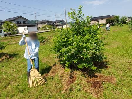 草刈り後はそのままにせず掃除します